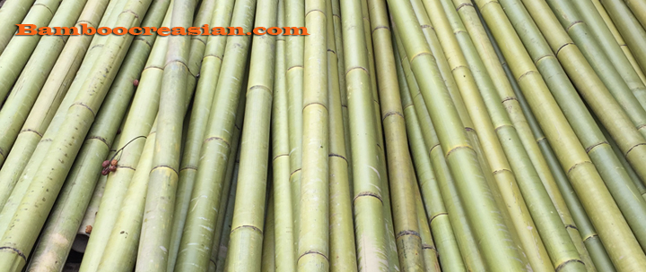 Bamboo Poles - bamboo sticks - Cane for tiki bar, Fencing and Decks, Home Décor