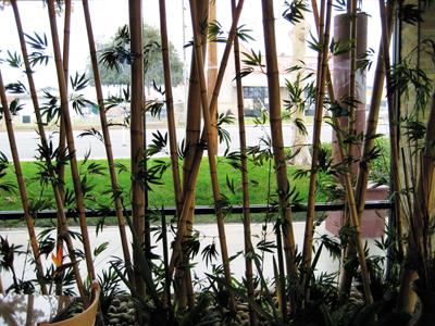 Bamboo smocked pole