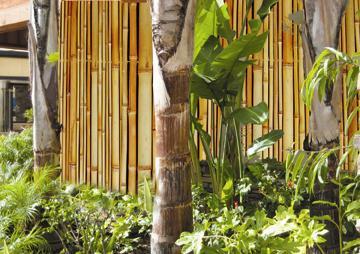 bamboo fencing natural